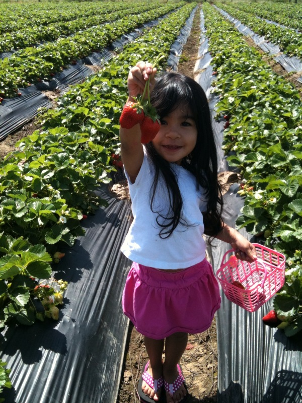 Saevang Strawberry Farm